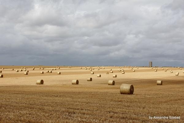 Hay field harvest