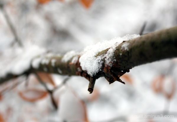 Macro of a stick covered with snow