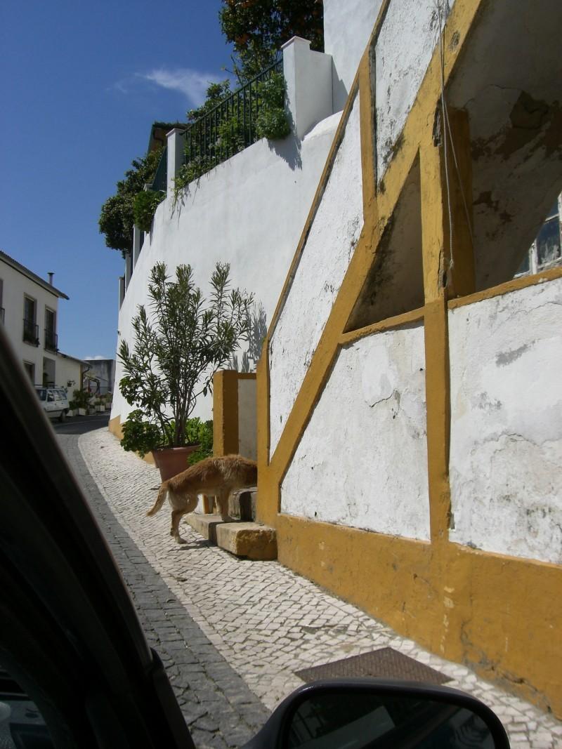 sai da estrada, cão!