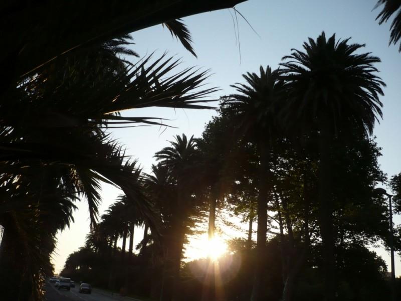 sunset blvd (what else?)