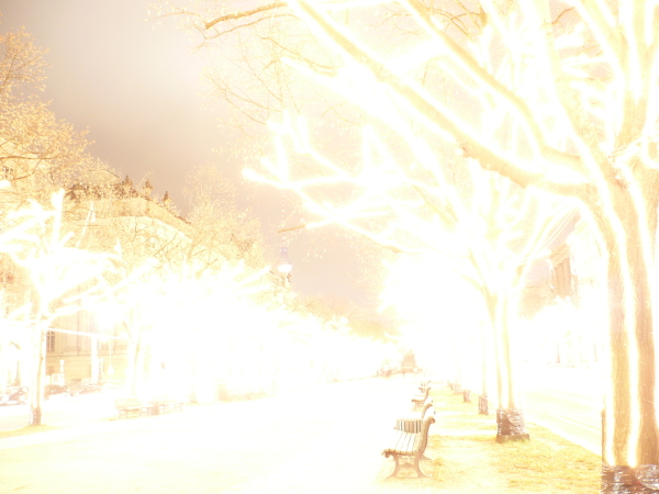 linden, overexposed