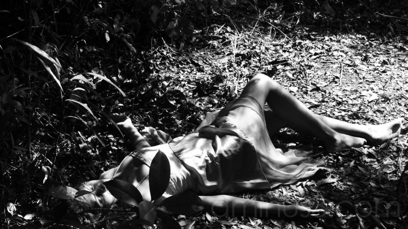 Sleeping in the Forest B&W 16x9