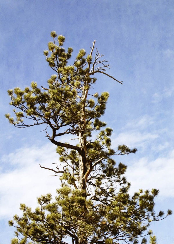 Tree in New Mexico