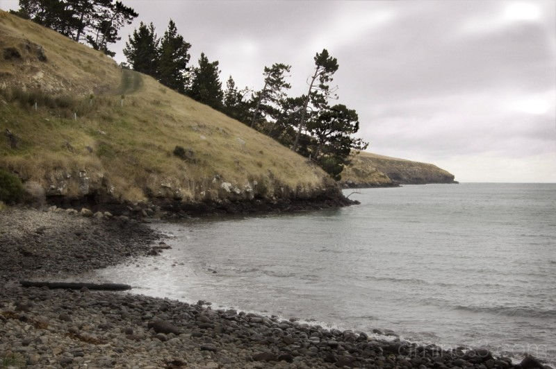 little pigeon bay ii