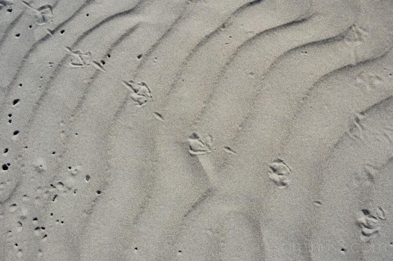 gullprints