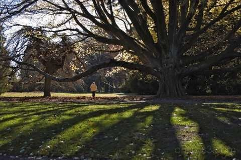 Long shadows in the gardens