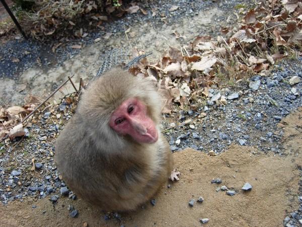 guilty monkey