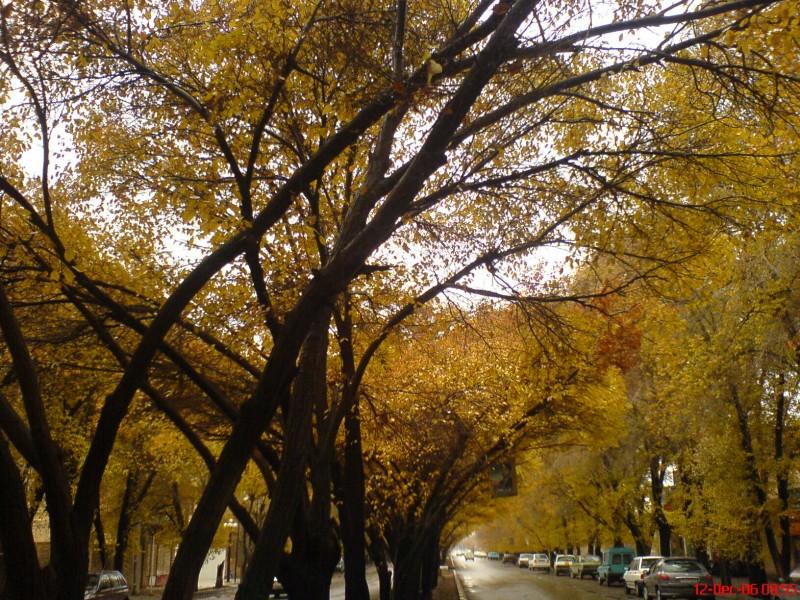 Rainy Yazd!