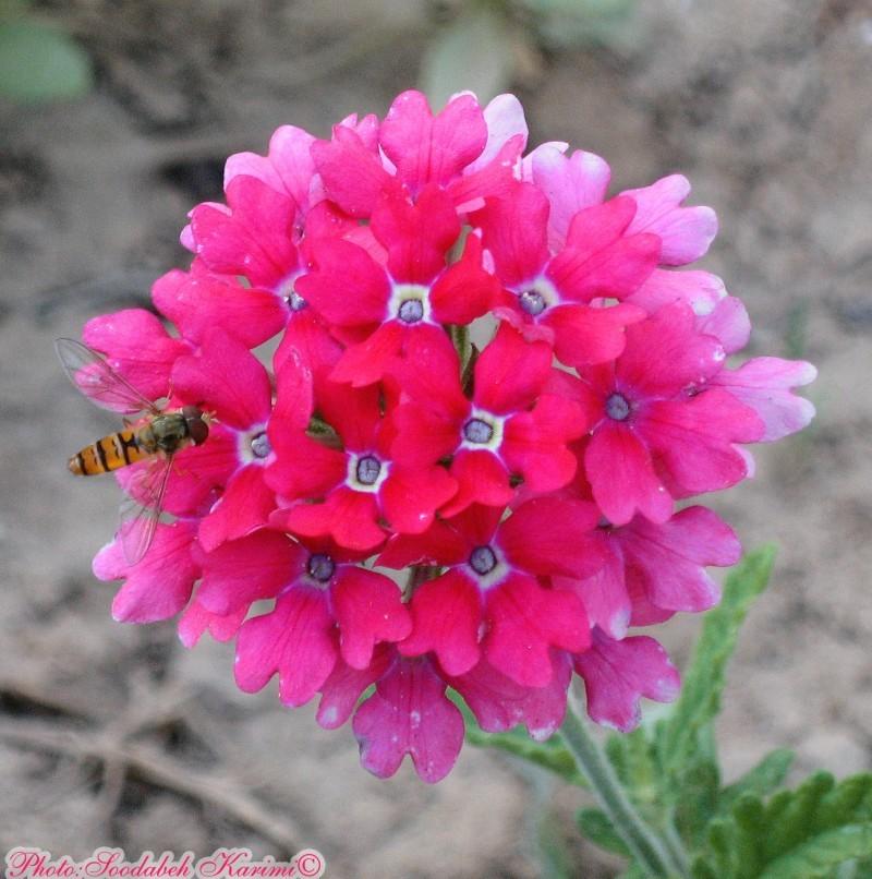 I Like Nectar Too