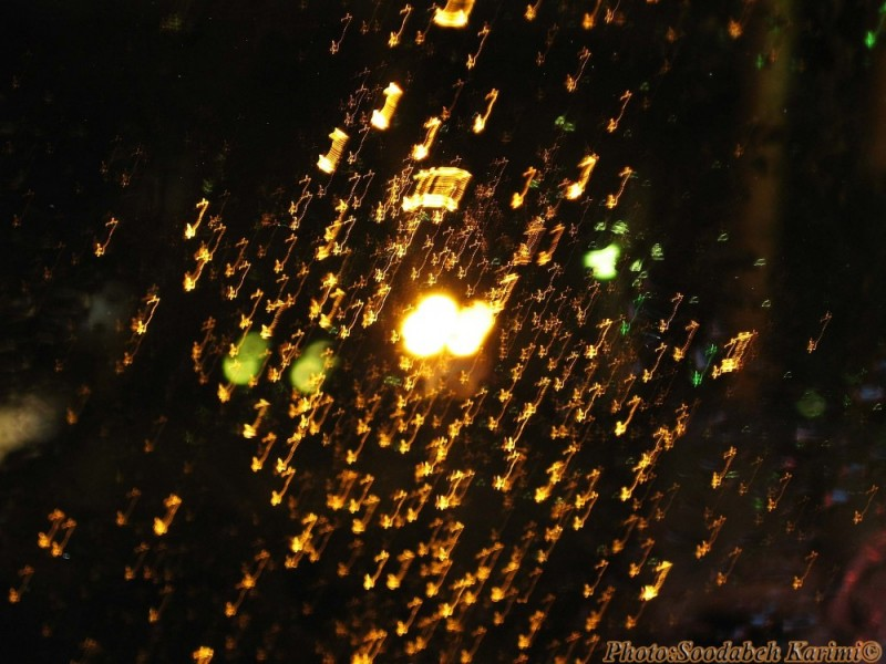 Rainy Reflections(1)
