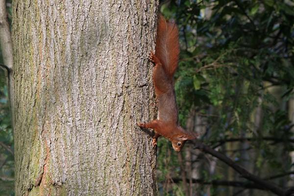 Squirrel [1 of 3]