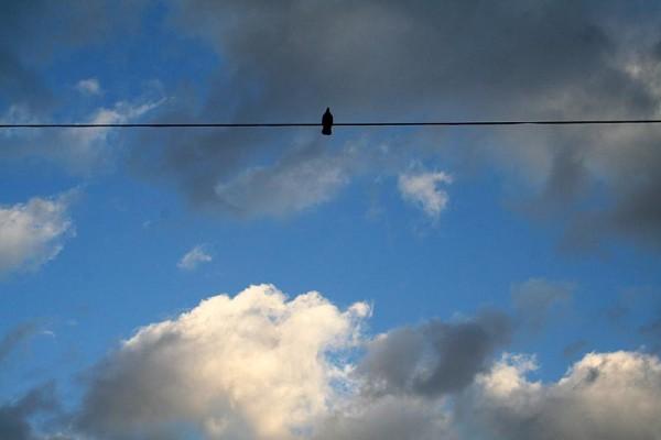 The dove.