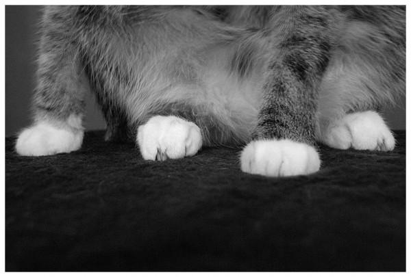 Cat's feet