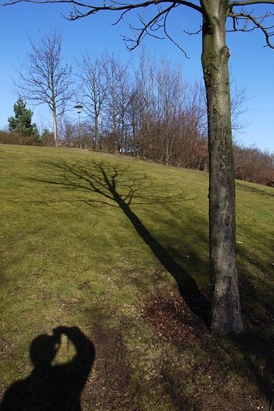 Tree, me