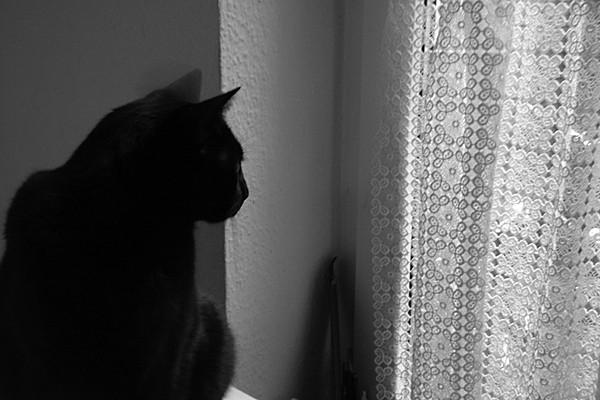 The friends' cat