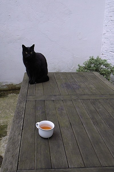 Friend's cat & tea