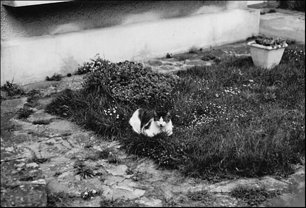 Flowerpot and cat