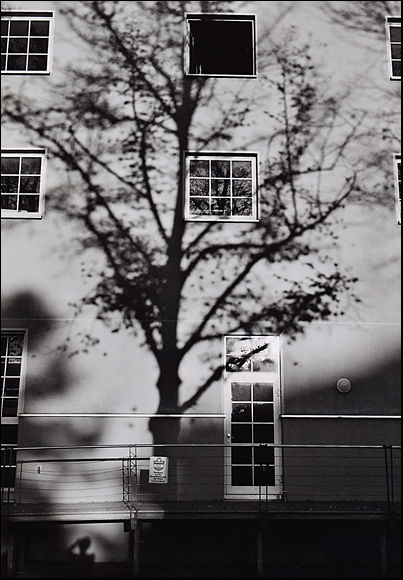 Self portrait with tree
