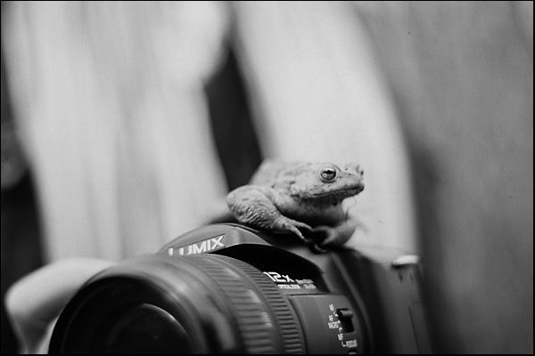 Lumix (not mine) with frog