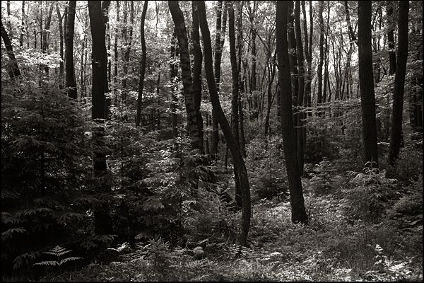 In the woods #3