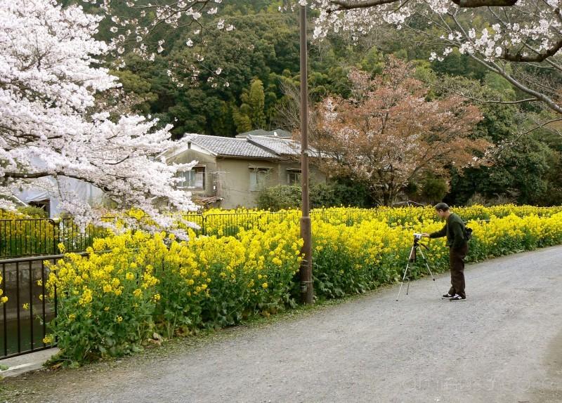 Photographer lake biwa canal kyoto spring