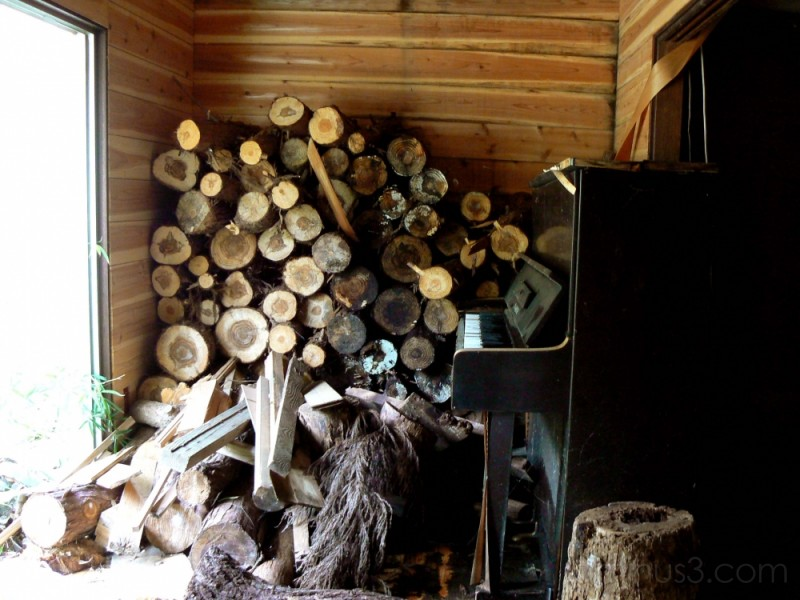 Piano in the woodshed