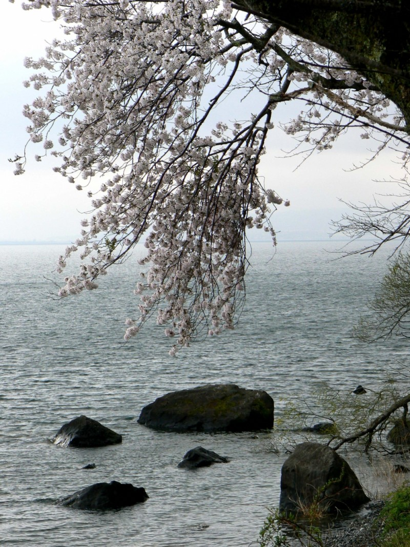 Lake-side in Spring