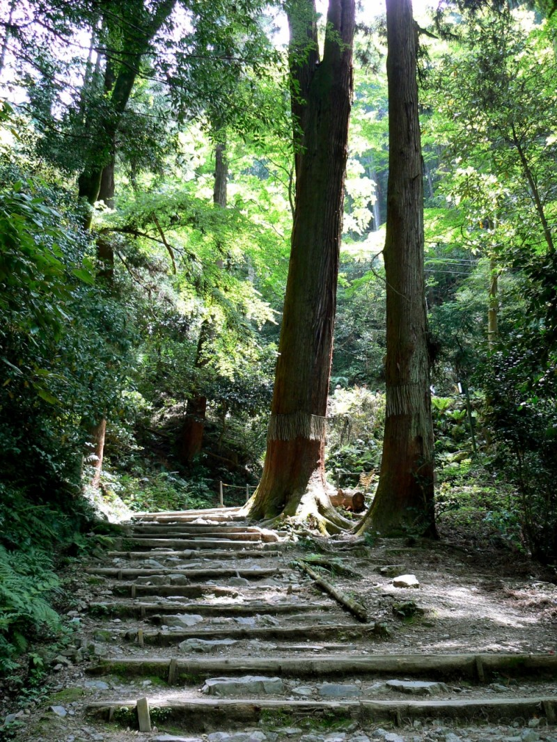 Forest path at Kami-Daigo