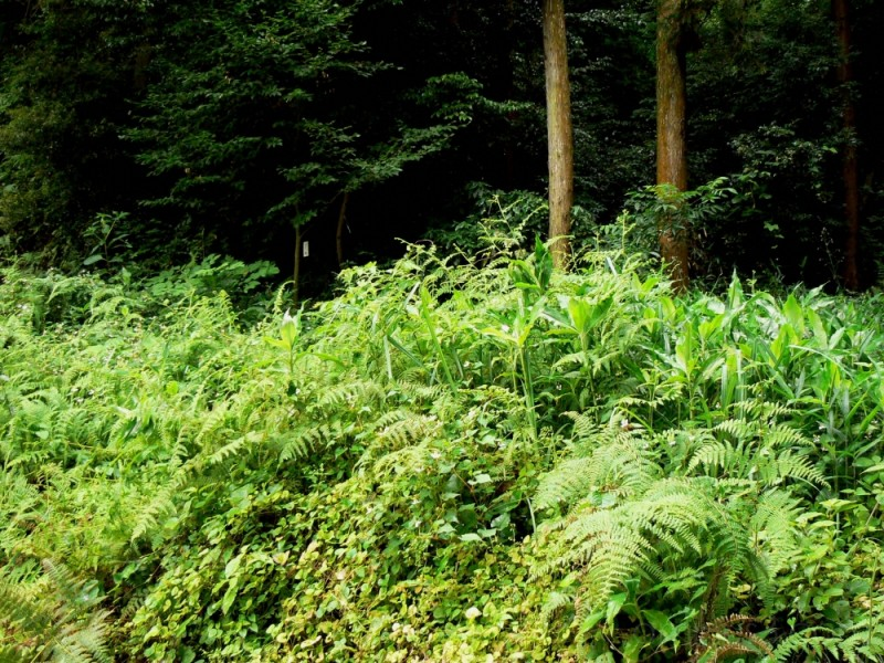 Forest surrounding