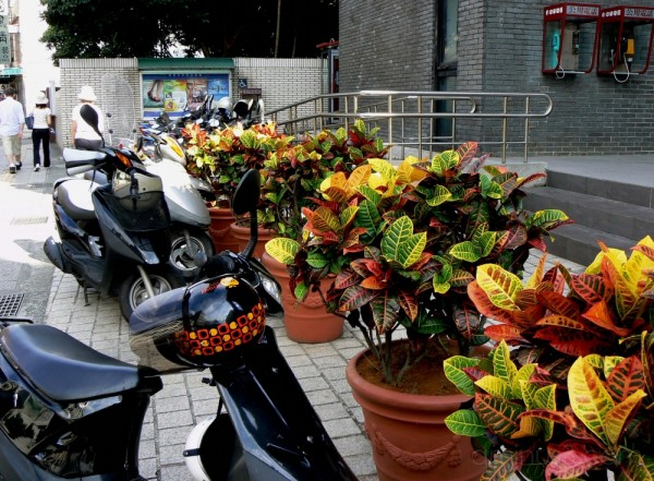 Tropical pot plants
