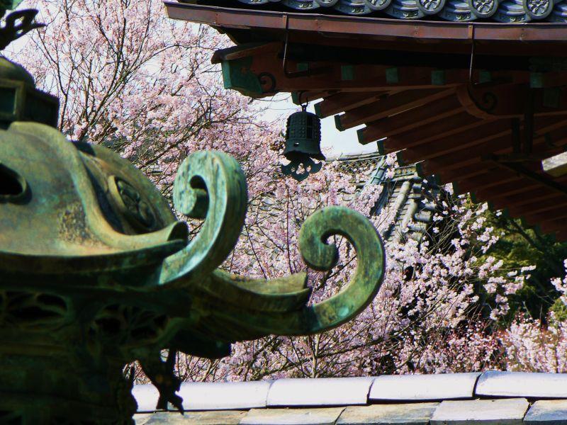 Sakura at Bishamon Temple III