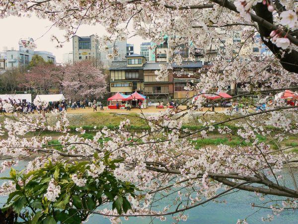 Kamogawa hanami