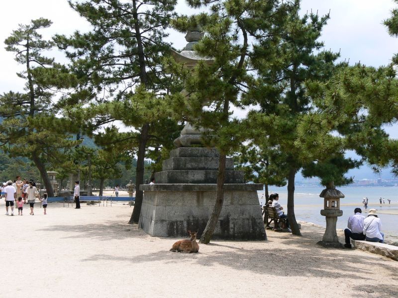 Deer on Miyajima Island