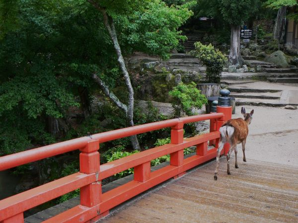 Deer crosses bridge