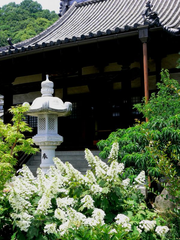 Lantern and hydrangeas outside temple