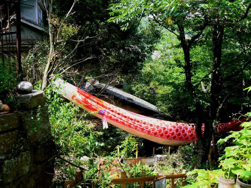 carp streamer in trees