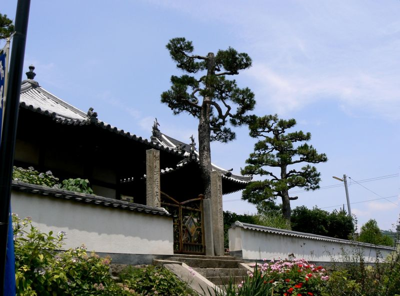 Pine trees outside a temple in Onomichi