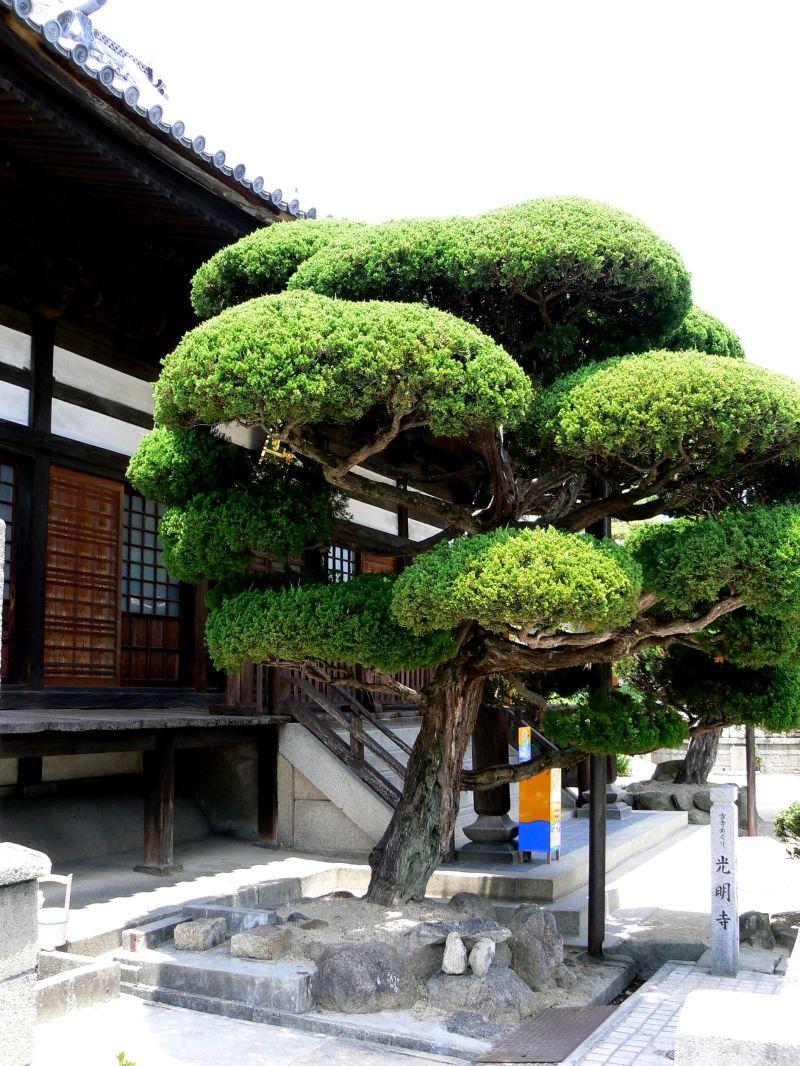 Clipped tree