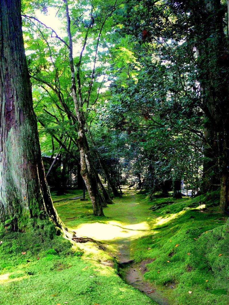 Mossy path at Natadera