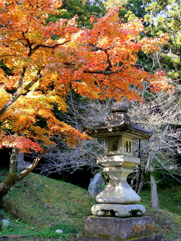 Fall leaves over a stone lantern