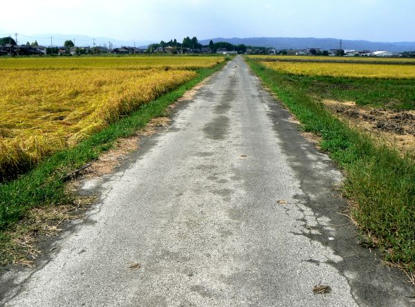 Country road between rice fields
