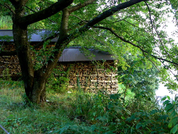 Firewood in a rustic shelter