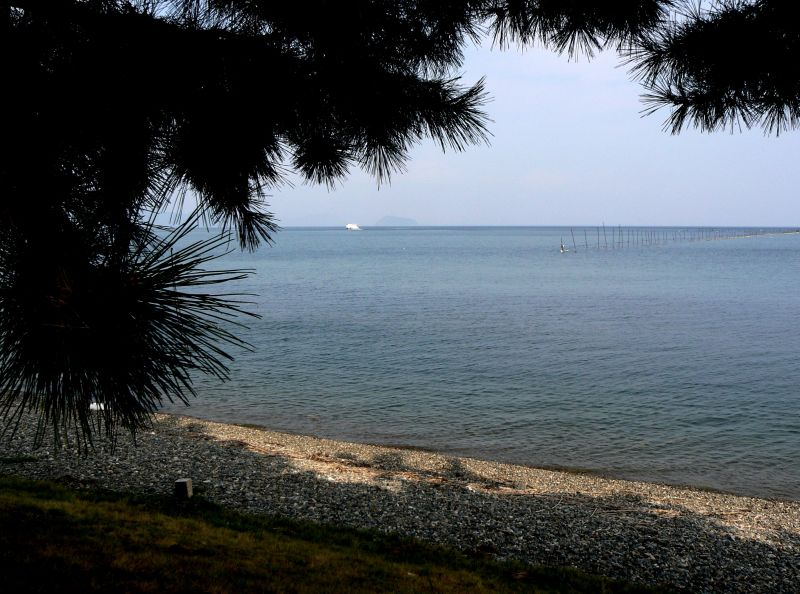 View of lake from under pine trees