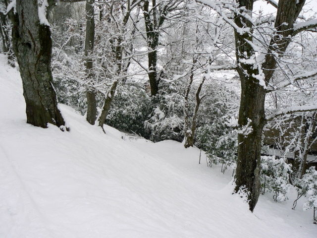 Snowy hillside with trees