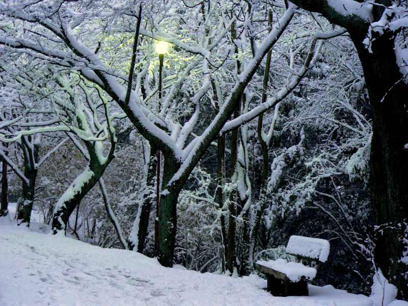 Lamplight on the snow
