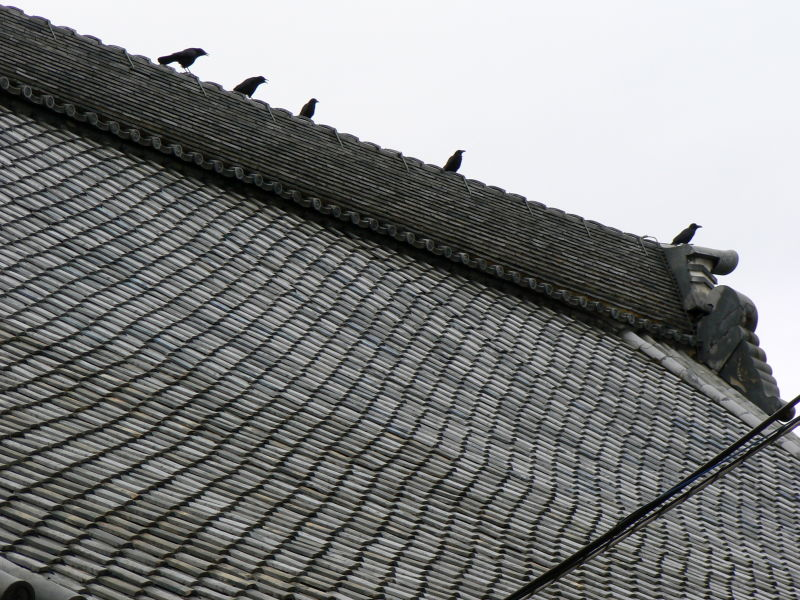 Crows in the ridge of a Japanese temple roof