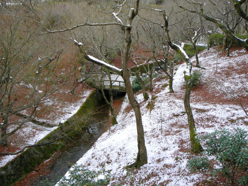 Snowy landscape with trees and stram.