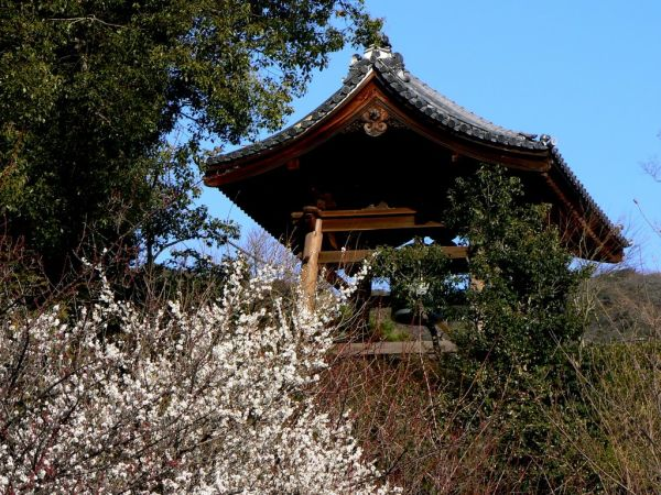 Pink plum blossom in front of Japanese bell tower