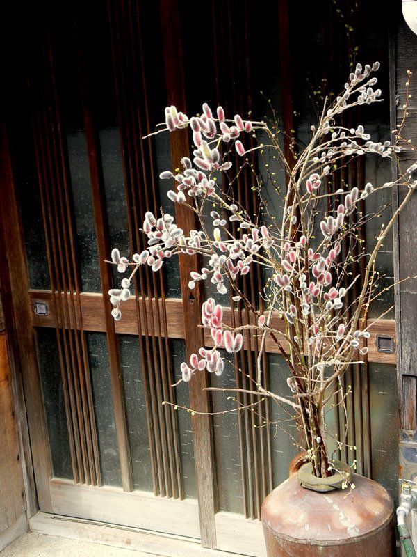 Pussy willow decorates a Japanese doorway