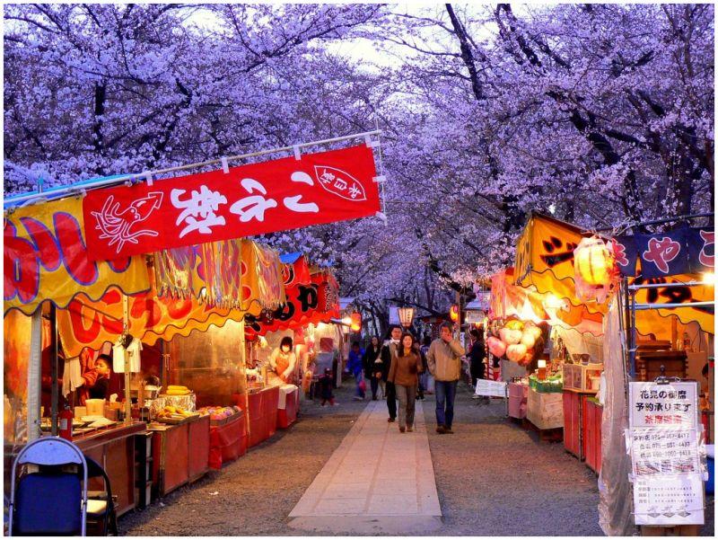 Evening Hanami at Hirano Shrine
